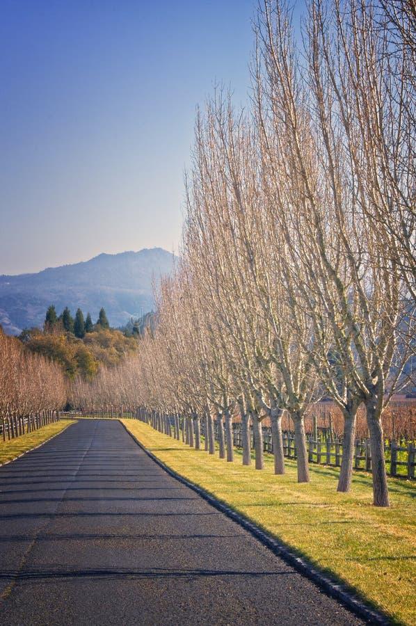 Estrada com árvores desencapadas, Califórnia imagens de stock royalty free