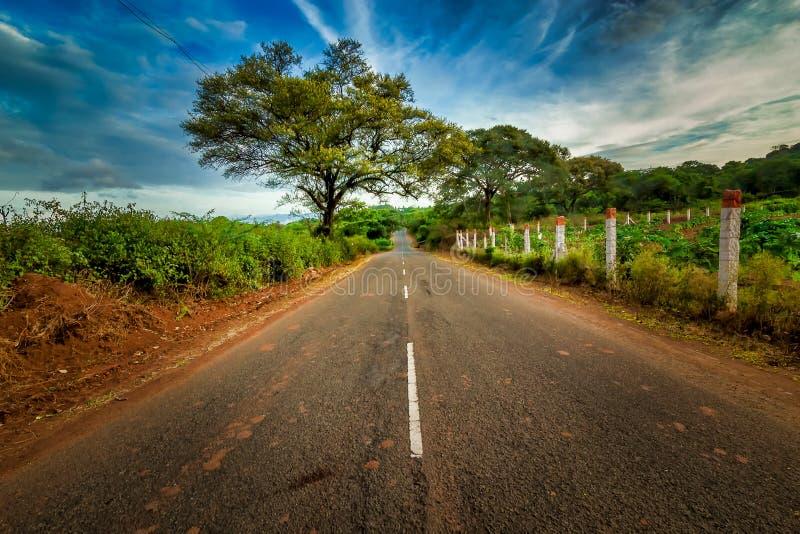 Estrada com as árvores na Índia do Tamil Nadu de Coimbatore do lado foto de stock