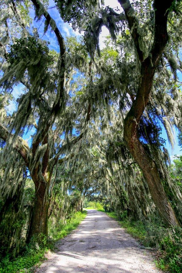 Estrada com as árvores que pendem sobre com musgo espanhol em EUA do sul fotos de stock