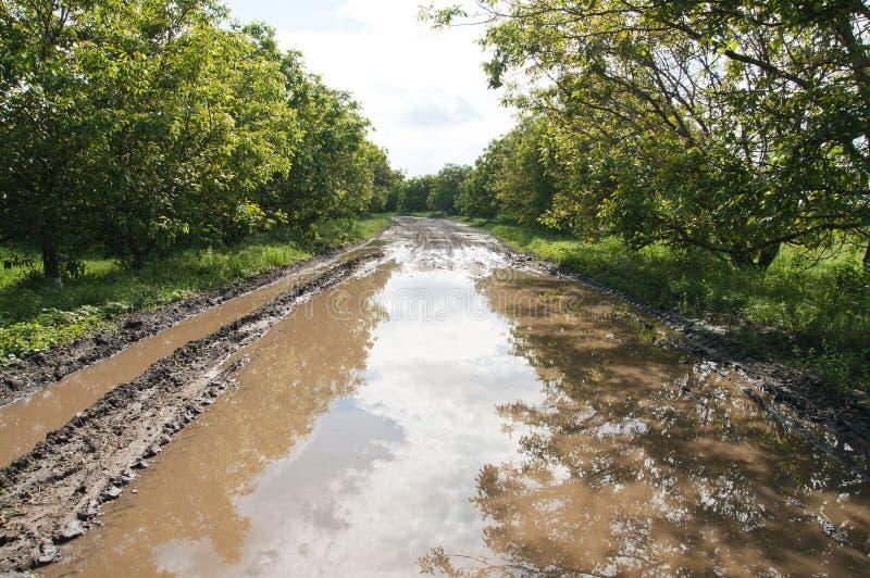 Download Estrada com poça foto de stock. Imagem de cena, campo - 16852012