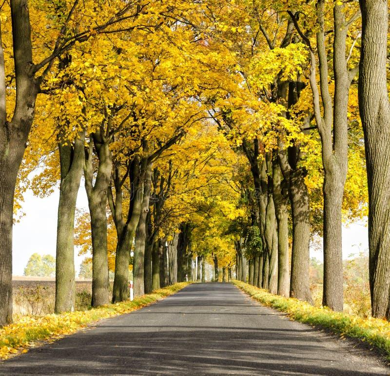 Estrada com túnel das árvores no outono no Polônia fotos de stock