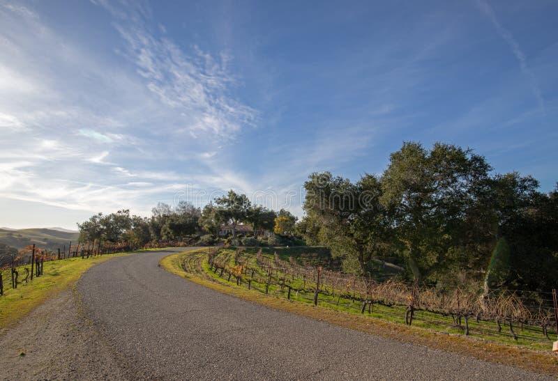 Estrada curvada através dos vinhedos da uva do grenache de Califórnia nos EUA fotografia de stock