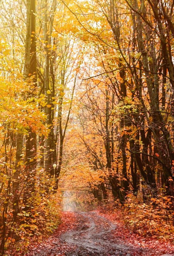 Estrada curvada bonita na paisagem vibrante da floresta do outono imagens de stock