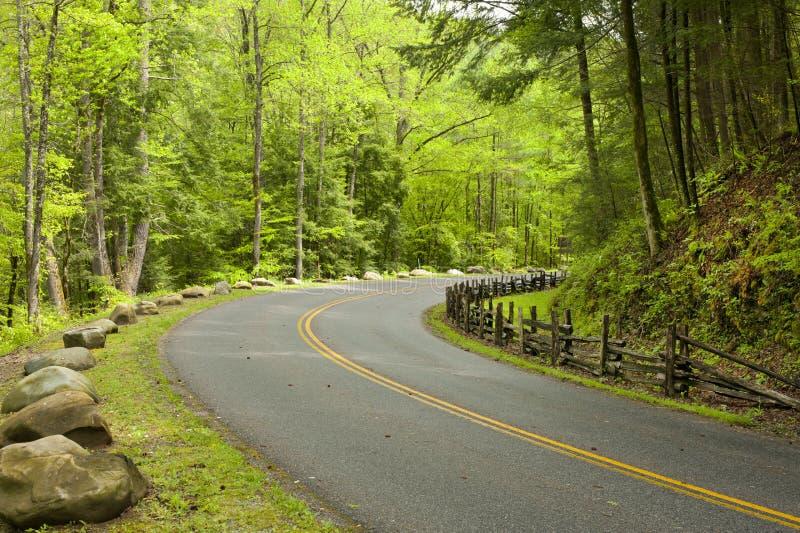 Estrada curvada na floresta foto de stock royalty free