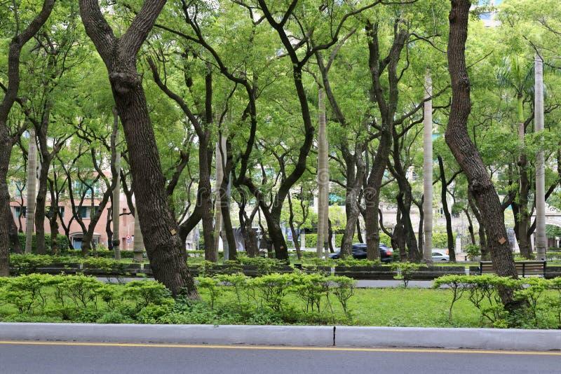 Estrada da árvore de cânfora imagens de stock royalty free