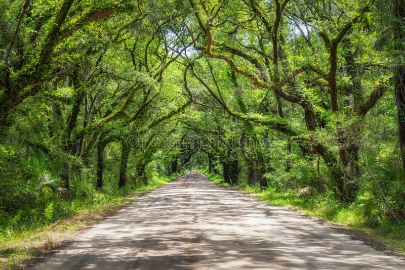 Estrada da baía da Botânica em South Carolina imagem de stock royalty free