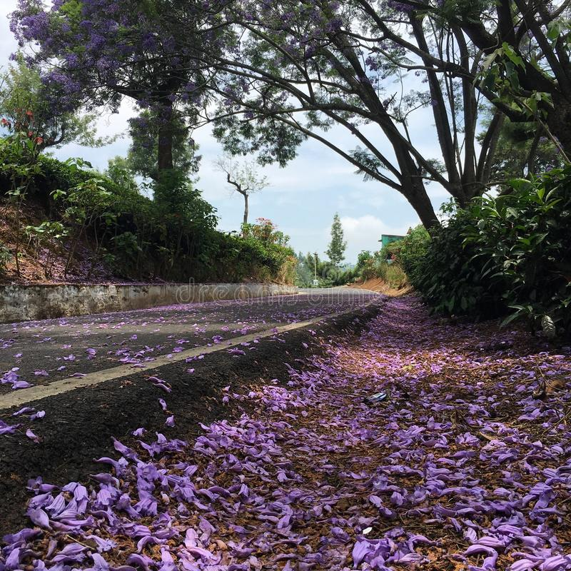 Estrada da flor fotos de stock royalty free
