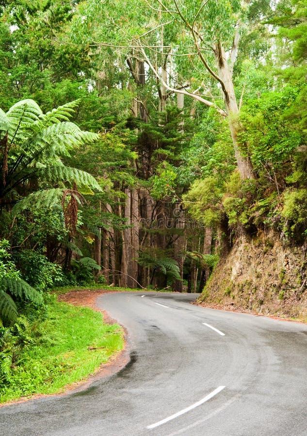 Estrada da floresta húmida imagem de stock royalty free