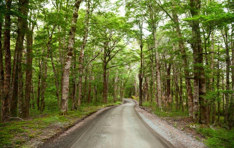Estrada da floresta húmida fotos de stock royalty free
