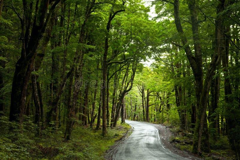 Estrada da floresta húmida foto de stock