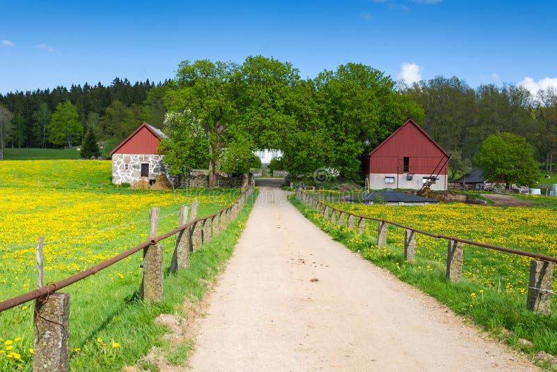 Estrada da mola à exploração agrícola sueco fotografia de stock