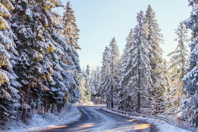 Estrada da montanha no inverno a Dinamarca ensolarada fotos de stock