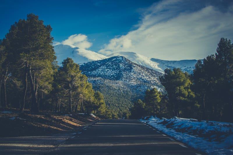 Estrada da neve, paisagem branca Floresta imagem de stock royalty free