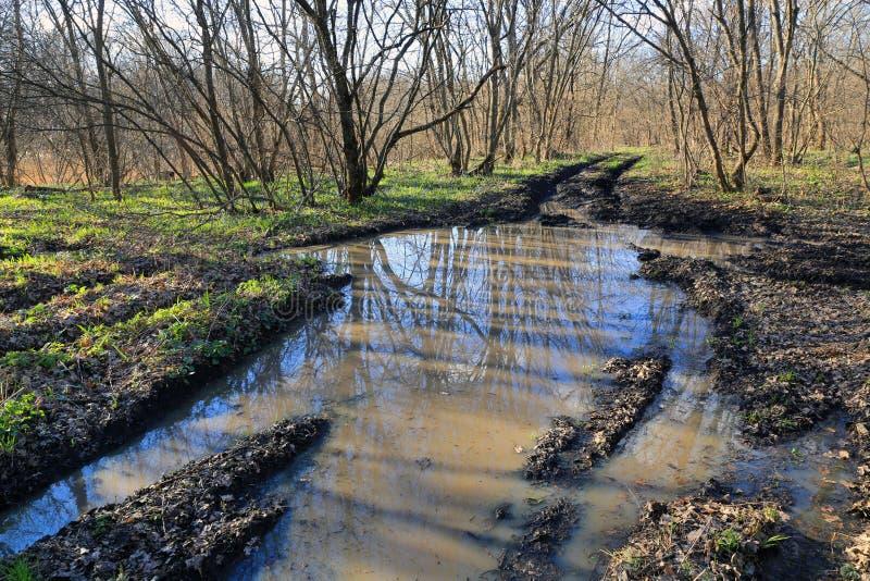 Estrada da rotina na floresta fotografia de stock