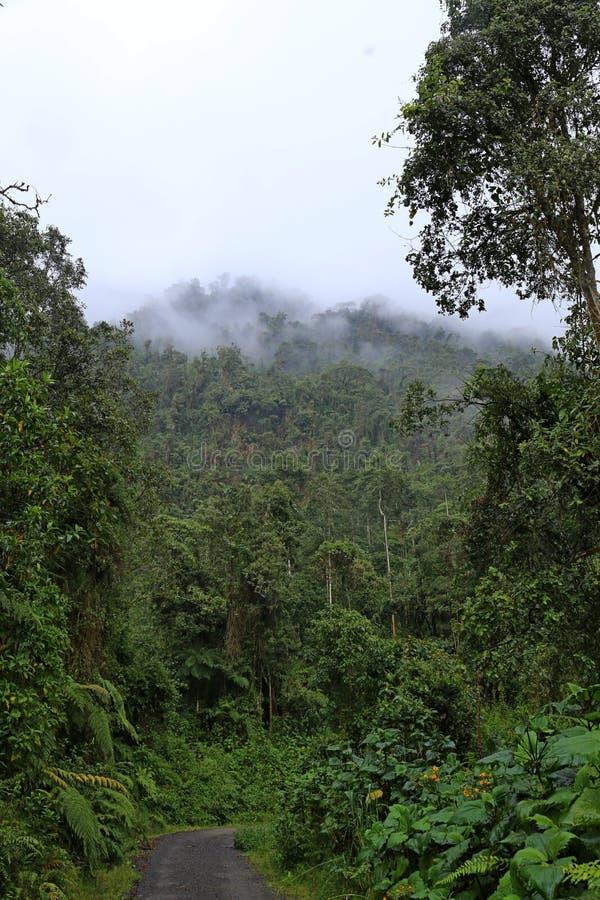 Estrada da selva do enrolamento em Colômbia, Ámérica do Sul - uma pista fotografia de stock