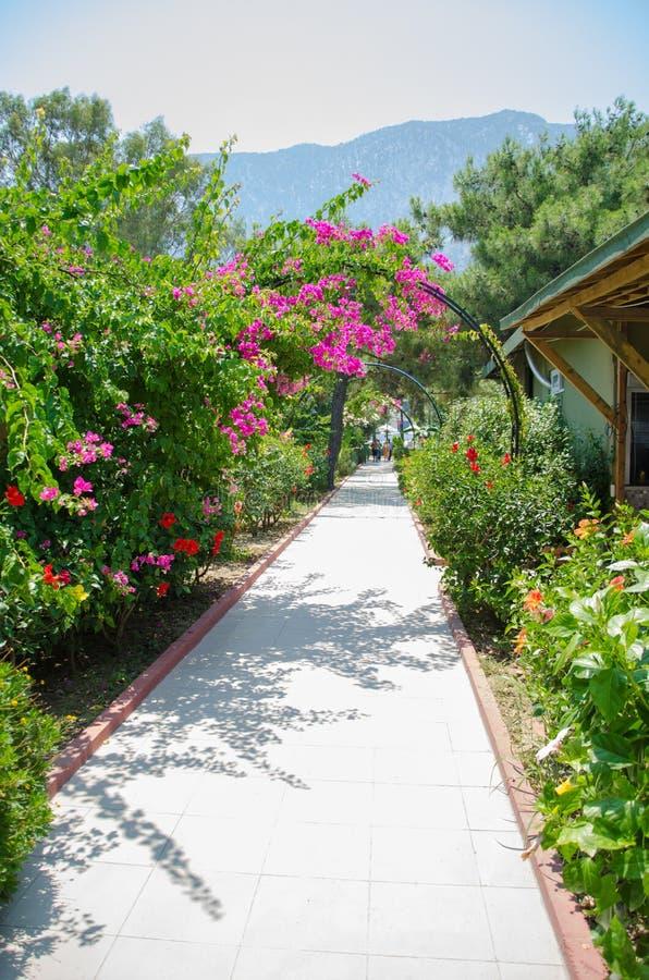 A estrada da telha encoberta nas flores, vegetação Trilha vazia imagem de stock