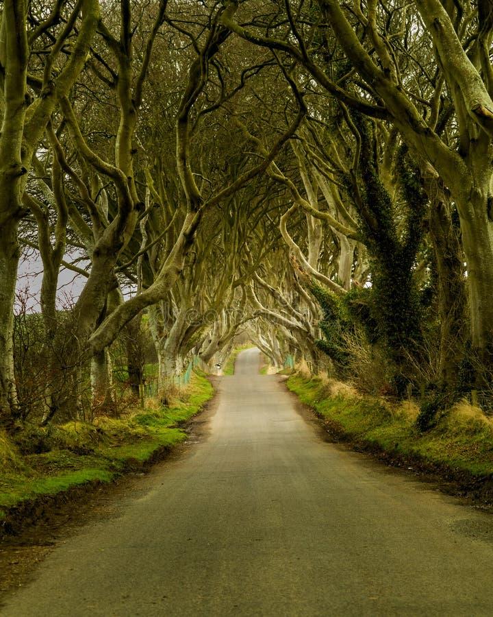 A estrada das conversão da obscuridade em Irlanda do Norte corre através das árvores velhas imagem de stock