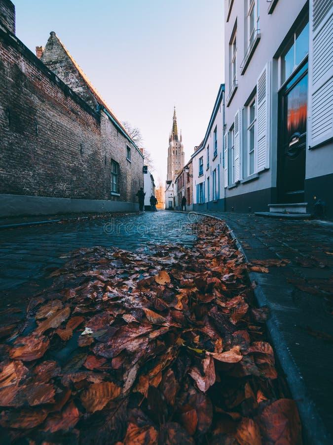 A estrada das folhas foto de stock