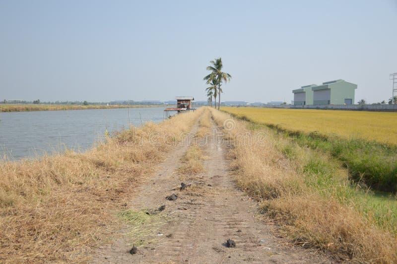 Estrada de areia no país natural Chachoengsao , Tailândia fotos de stock