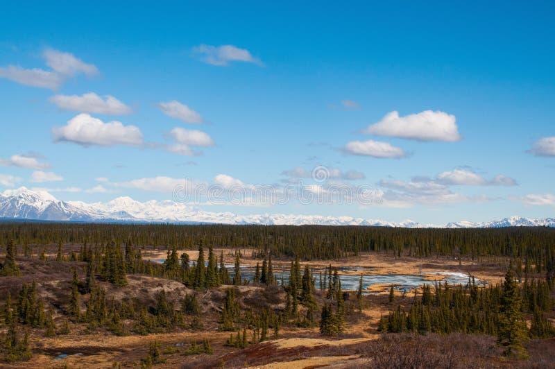 Estrada de Denali fotografia de stock