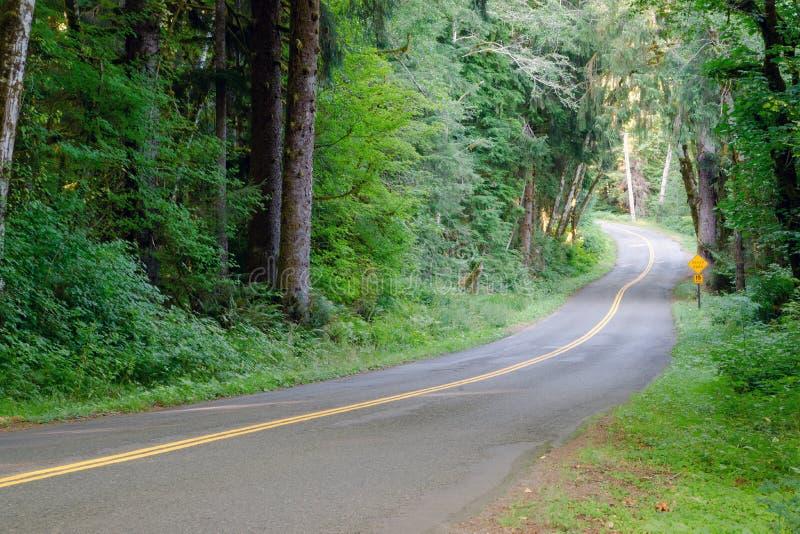 A estrada de duas pistas corta completamente o dossel de árvore denso Hoh Rainforest foto de stock