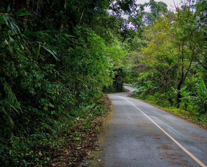 Estrada de enrolamento com túnel da árvore da natureza foto de stock royalty free
