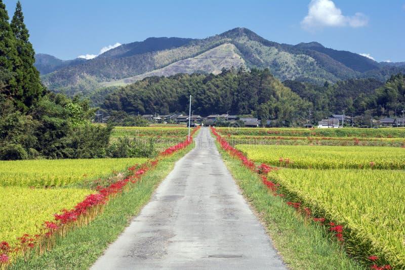 Estrada de exploração agrícola do outono foto de stock