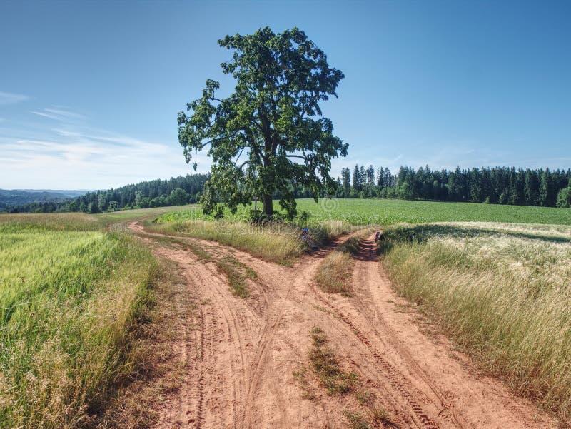 Estrada de exploração agrícola vermelha entre campos da cevada Estrada de terra empoeirada completamente fotografia de stock royalty free