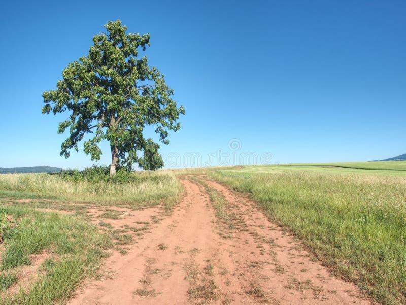 Estrada de exploração agrícola vermelha entre campos da cevada Estrada de terra empoeirada completamente foto de stock royalty free