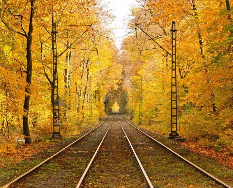 Estrada de ferro na floresta do outono fotografia de stock royalty free