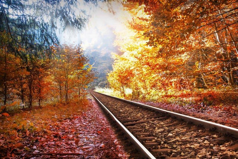 Estrada de ferro na floresta do outono imagem de stock royalty free