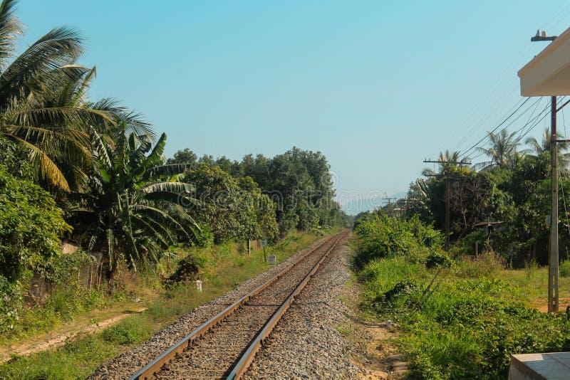 Estrada de ferro na selva foto de stock