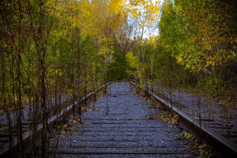 Estrada de ferro nas madeiras fotografia de stock royalty free
