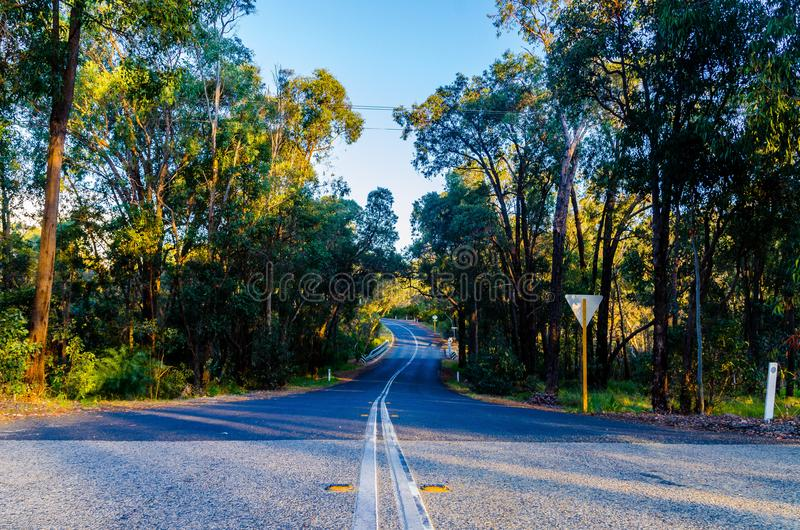 A estrada de floresta foto de stock royalty free