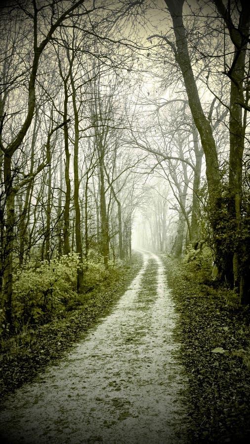 Estrada de floresta