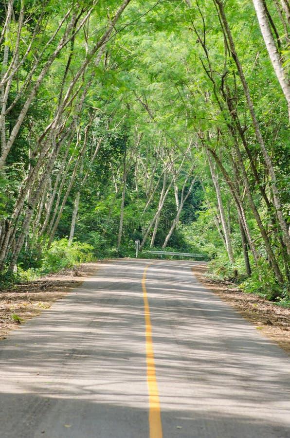 Estrada de floresta foto de stock royalty free