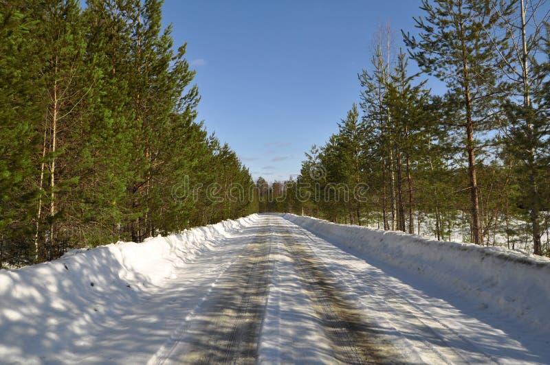 Estrada de floresta foto de stock
