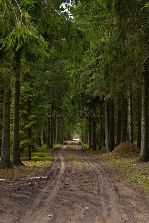 Estrada de floresta imagem de stock royalty free