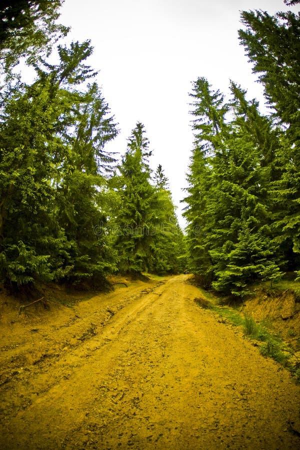Estrada de floresta imagem de stock