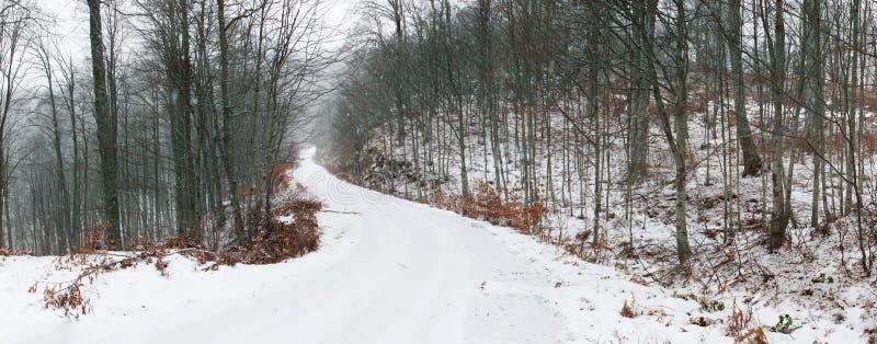 Estrada de floresta coberto de neve fotos de stock