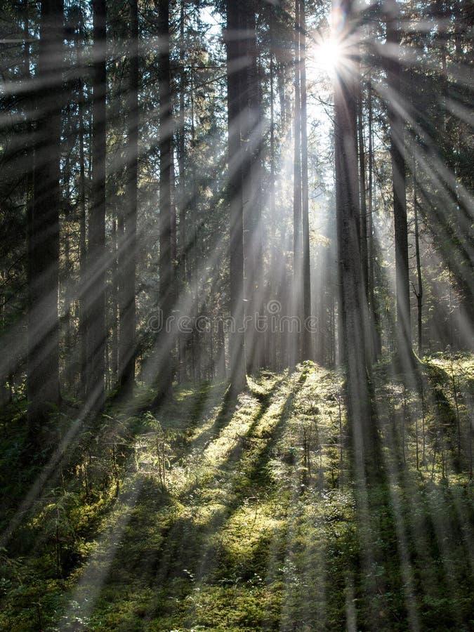 a estrada de floresta com sol irradia na manhã - efeito dos raios claros fotos de stock royalty free