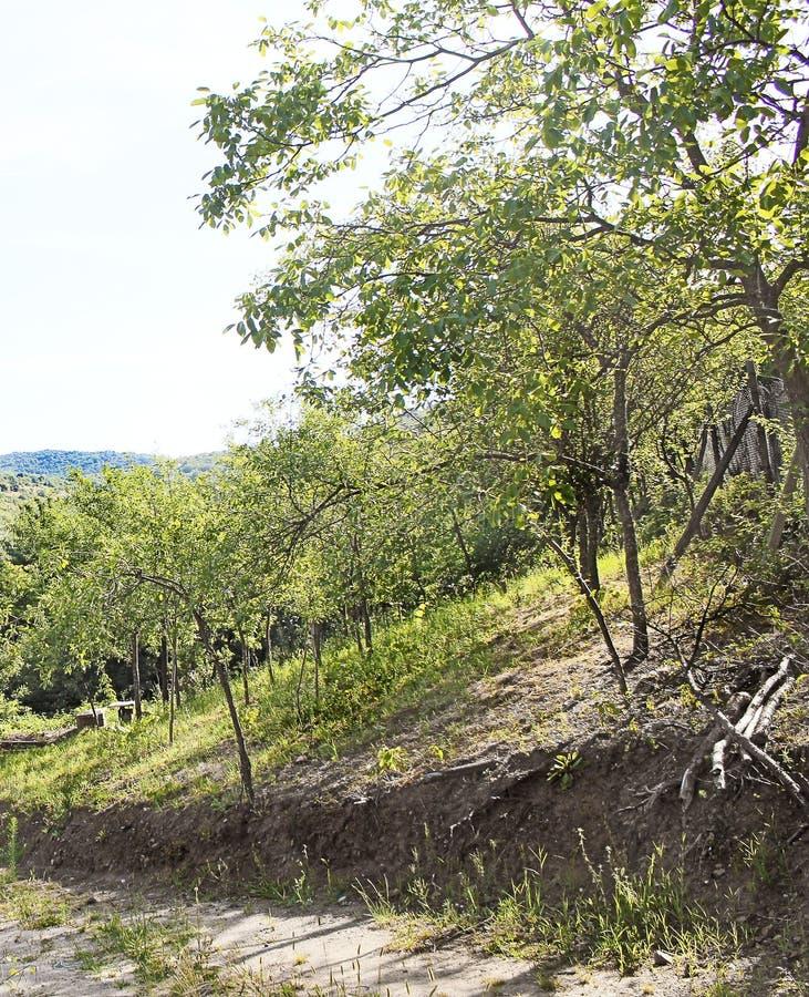 Estrada de floresta - Ghioroc Arad Romania foto de stock royalty free