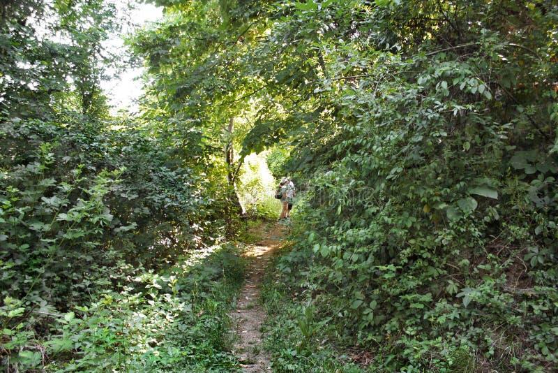Estrada de floresta - Ghioroc Arad Romania 6 imagens de stock royalty free