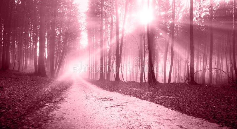 Estrada de floresta leve ensolarada vermelha do marsala místico fotografia de stock royalty free