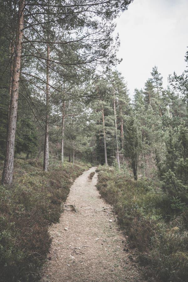 Estrada de floresta no início do verão foto de stock
