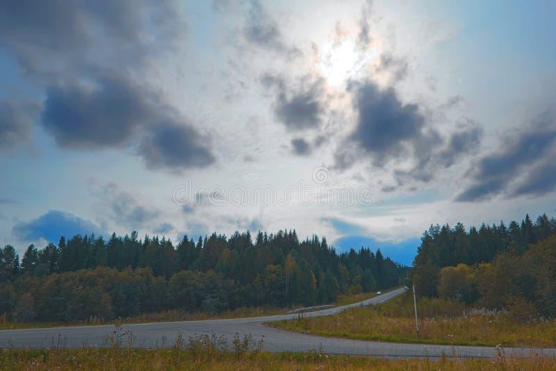 Estrada de floresta no por do sol fotos de stock