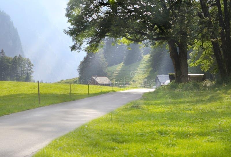 Estrada de floresta rural fotos de stock