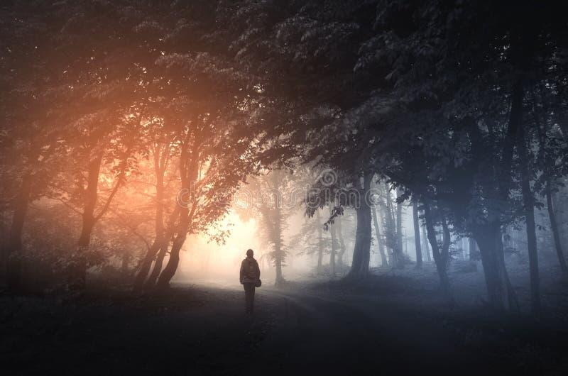 Estrada de floresta surreal com luz e névoa misteriosas imagem de stock