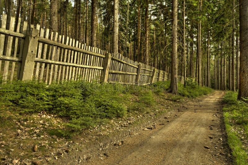 A estrada de floresta velha foto de stock royalty free