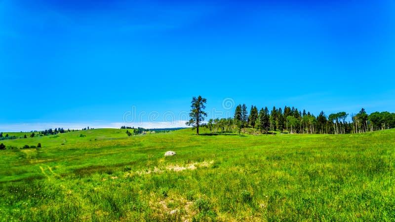 Estrada de Kamloops Princeton do alongthe das pastagem no Columbia Britânica, fotografia de stock royalty free